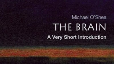 the brain book review